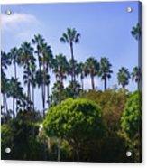 Palm Trees. My Beautiful California Acrylic Print