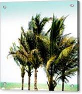 Palm Trees Ocean Breeze Acrylic Print