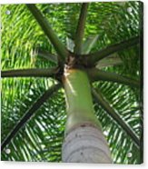 Palm Unbrella Acrylic Print