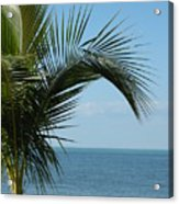 Palm View Acrylic Print