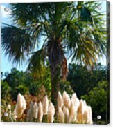 Palmetto Tree  Acrylic Print
