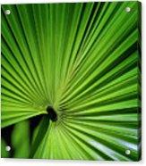 Palmgreen Acrylic Print by Al Hurley