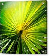 Radial Palm Acrylic Print