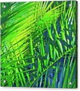 Palms 2 Acrylic Print