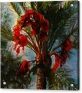 Palm's A Glow Acrylic Print