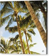 Palms Against Blue Sky Acrylic Print