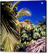 Palms All Around 2 Acrylic Print