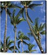 Palms And Blue Sky Acrylic Print