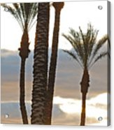 Palms And Light Acrylic Print