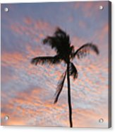 Palms And Pink Clouds Acrylic Print