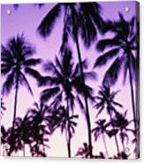Palms And Purple Sky Acrylic Print
