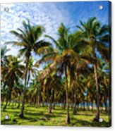 Palms And Sky Acrylic Print
