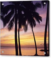Palms And Sunset Sky Acrylic Print