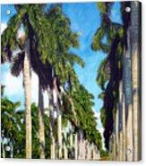 Palms Acrylic Print by Jose Manuel Abraham
