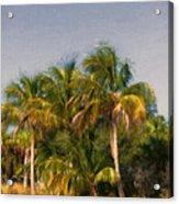 Palms - Naples Florida Acrylic Print