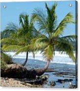 Palms On Ocean Acrylic Print