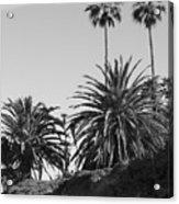 Palms2 Acrylic Print