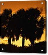 Palmset Acrylic Print