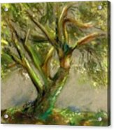 Palo Verde Acrylic Print