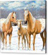 Palomino Appaloosa Horses In Winter Acrylic Print