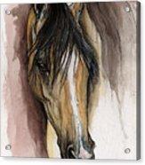 Palomino Arabian Horse Watercolor Portrait Acrylic Print
