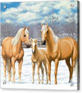 Palomino Horses In Winter Pasture Acrylic Print by Crista Forest