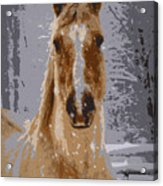 Palomino In The Snow Acrylic Print