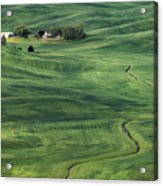Palouse Green Fields Acrylic Print