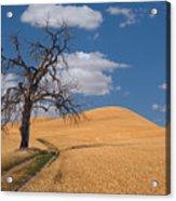 Palouse Wheat Field Acrylic Print