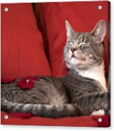 Pampered Pet Acrylic Print by Mandy Wiltse