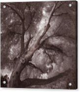 Pams Tree  Two B And W Acrylic Print