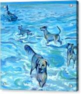 Panama. Salted Dogs Acrylic Print