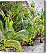 Panama Trees Acrylic Print