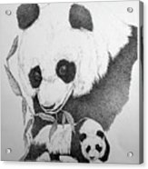 Panda Collage Acrylic Print