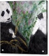 Pandas With Golden Bamboo Acrylic Print