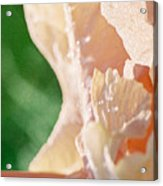 panel two from Iris Acrylic Print