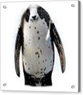 Panguin Acrylic Print