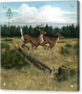 Panhandle Deer Acrylic Print
