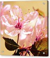 Panoplia Floral Acrylic Print