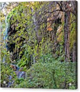 Panorama Of Gorman Falls At Colorado Bend State Park - Lampasas Texas Hill Country Acrylic Print