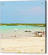 Panorama Of The El Garrapatero Beach On Santa Cruz Island In Gal Acrylic Print