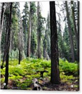 Panoramic Forest Acrylic Print
