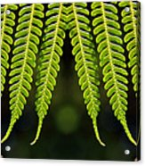 Panoramic Veil Of Ferns Acrylic Print