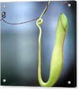 Pan's Green Flute Acrylic Print