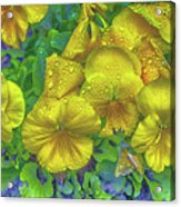 Pansies - Coloring Book Effect Acrylic Print