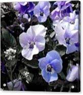Violas Ocean Dream Acrylic Print