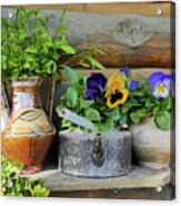 Pansies In Pots Acrylic Print