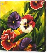 Pansies Or Vuela Mis Pensamientos Acrylic Print