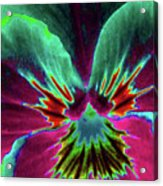 Pansy 01 - Photopower - Thoughts Of You Acrylic Print