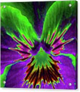 Pansy 02 - Photopower - Thoughts Of You Acrylic Print
